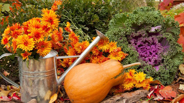 My october to do list by the whistling gardener news of mill creek - Gardening in october a brief to do list ...