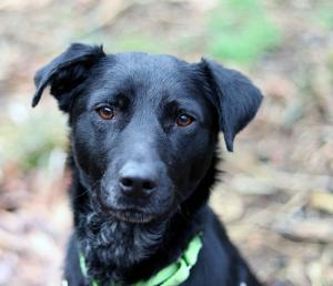 Meet our dog of the week Sadie, a two-year-old Lab mix who's as sweet as they come. Sadie is a lovable girl who wants nothing more than to spend time with you. She can take a few minutes to warm up but once she does, she's happy to go anywhere and everywhere with you.