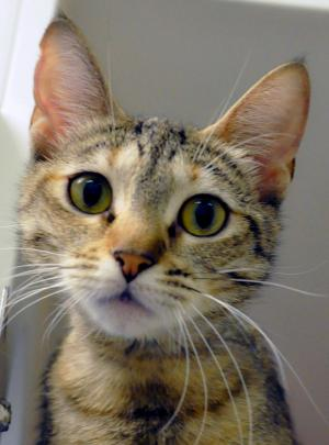 Megan is a goofy and fun one year old looking for a loving home. Photo courtesy of Homeward Pet.