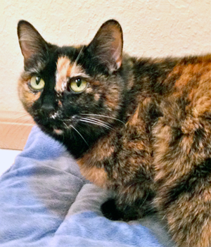 From the Community Cat Coalition our forever home cat of the week Naomi is a sweet 8 year old cat that is very calm and sweet. Naomi loves attention. She always uses her litter box and scratching post.