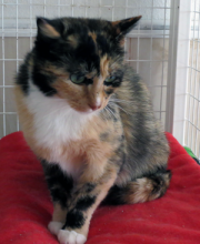 Forever home cat of the week, Molly, was trapped along with her two kittens after being abandoned by the man who had cared for them when he moved after selling the land.