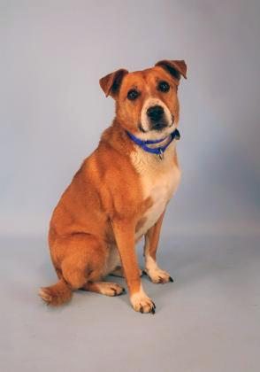 If you're ready to add some entertainment to your life, our dog of the week Madonna is ready to sell you a front row ticket to her show. Her dancing ability will knock your socks off! At eleven years young, this Terrier/Beagle mix is one talented and terrific pup.