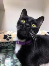 Sometimes the best relationship is the one you must really work for. It creates a strong bond that will endure the test of time. If you're ready to bring that kind of love into your life, then come and meet our cat of the week Kirby!