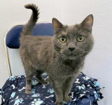 Our cat of the week Lucy Lu is truly a delight. She's affectionate, friendly and cute as can be. She bonds strongly to her person and wants to be their faithful companion through it all. At just over 14-years-old, Lucy Lu has had ample time to perfect her delightful personality and enchanting meows.