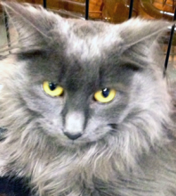 Cat of the week Elsa is a pretty medium hair girl.  She is shy, but oh so sweet.