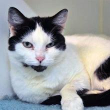 Our cat of the week Janine is the cuddliest feline you'll ever meet! She is about ten years old and wants nothing more than snuggling in your lap all day long.